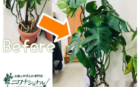 剪定 観葉 植物